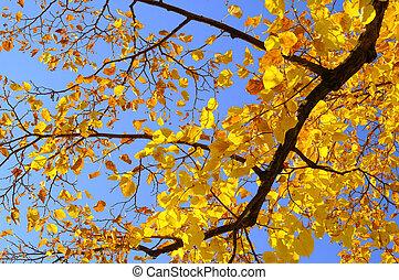 Árbol de lima en otoño 01