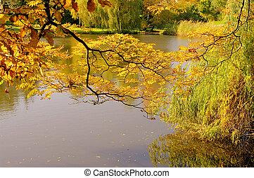 Árbol en el estanque en otoño 01