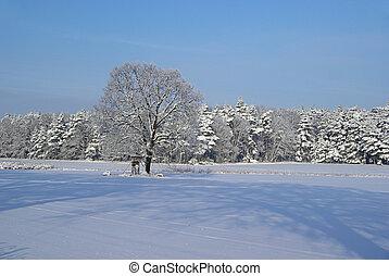 Árbol en invierno 01