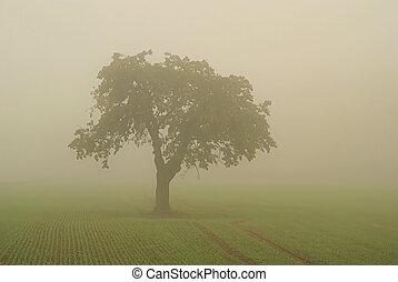 Árbol en niebla 01