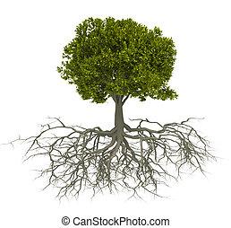 Árbol y raíz