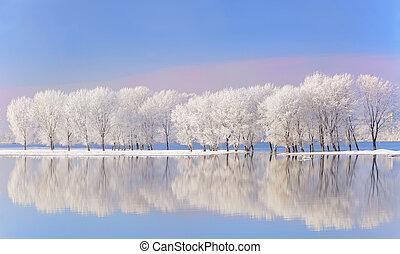 Árboles de invierno cubiertos de escarcha