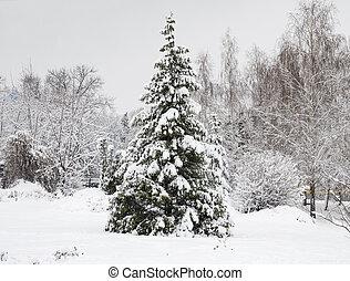 Árboles en la nieve, hermoso paisaje invernal