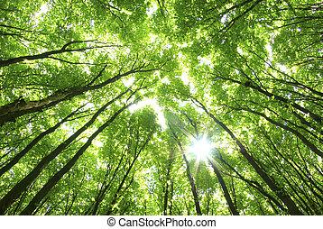 Árboles verdes de fondo