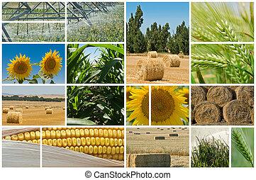 Agricultura.