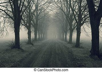 Avenida en niebla