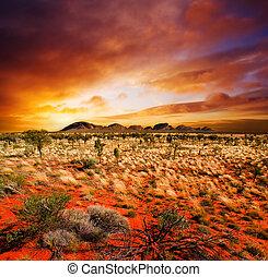 Belleza del desierto de Sunset