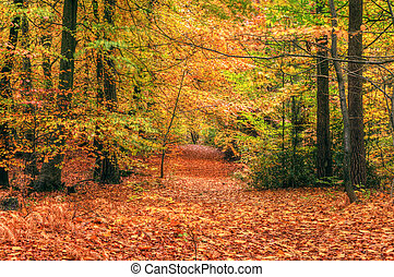 Bonita escena de otoño