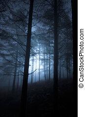 Bosque brillante