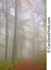 Bosque de Beech en niebla 06