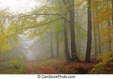 Bosque de Beech en niebla 08