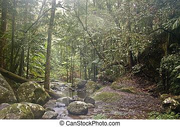 Bosque de lluvia