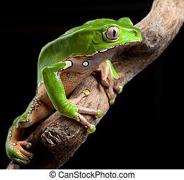 Bosque de lluvias de amazonas verdes
