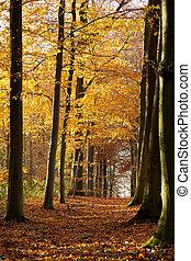 Bosque de otoño - 01