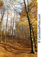 Bosque de otoño - 02