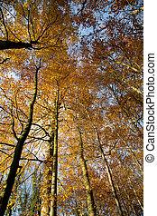 Bosque de otoño - 03