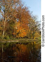 Bosque de otoño - 04
