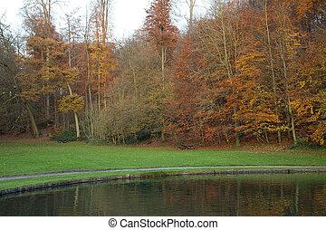 Bosque de otoño - 05