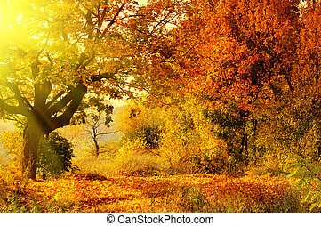 Bosque de otoño con rayo solar