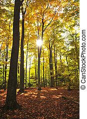 Bosque de otoño