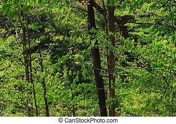 Bosque de primavera verde