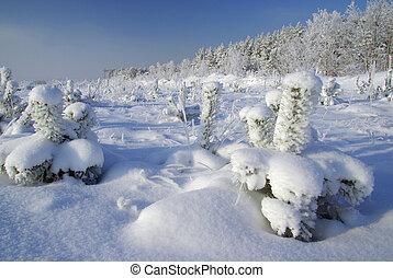 Bosque en invierno 02