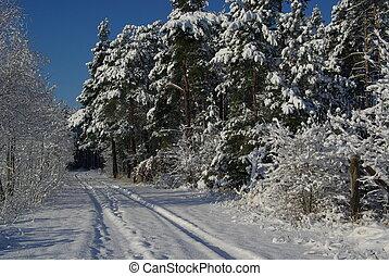 Bosque en invierno 14