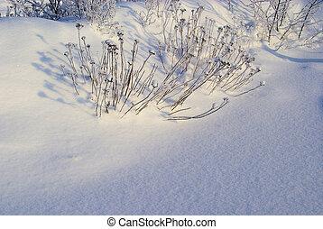 Bosque en invierno 21