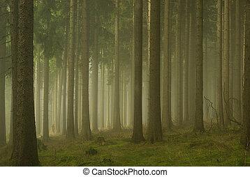 Bosque en la niebla 01