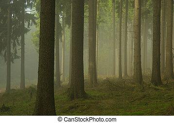Bosque en niebla 02