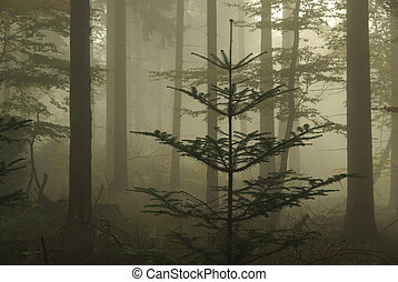 Bosque en niebla 06