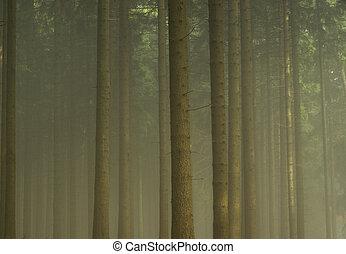 Bosque en niebla 07