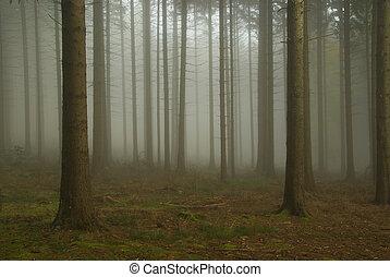 Bosque en niebla 08
