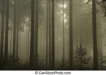 Bosque en niebla 12