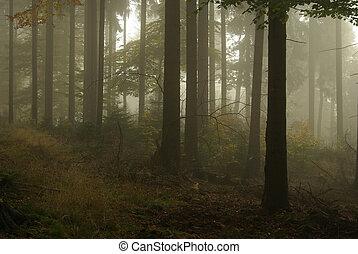 Bosque en niebla 15