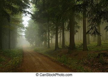 Bosque en niebla 18