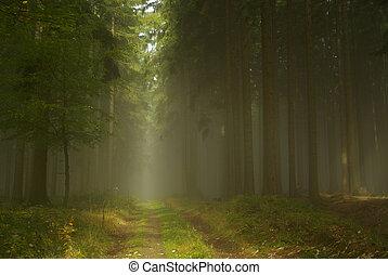 Bosque en niebla 20