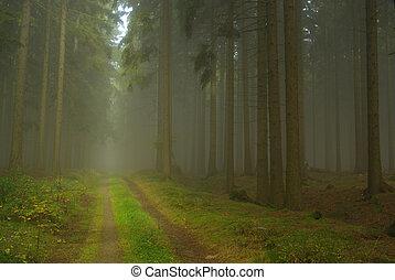 Bosque en niebla 21
