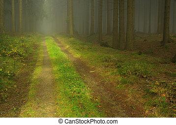 Bosque en niebla 22