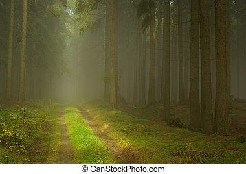 Bosque en niebla 23