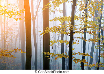 bosque, haya, niebla, oscuridad, misterioso