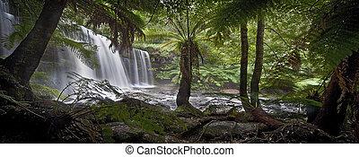 Bosque lluvioso