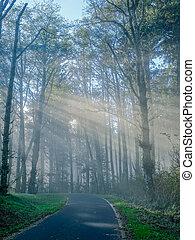 bosque, rayos, luz