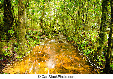 Bosque tropical en Tailandia