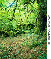 Bosque tropical Hoh, Washington