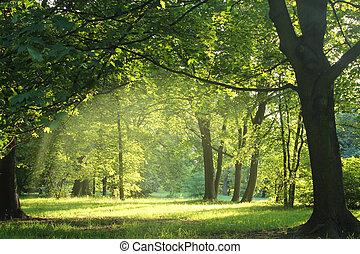 bosque, verano, árboles