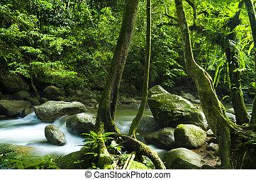 Bosque verde y corriente
