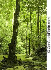 Bosque verde y río