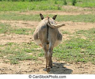 burro, butt