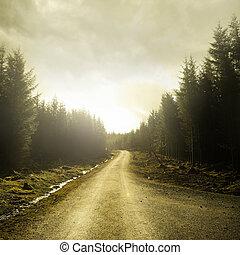 Camino a través de un bosque